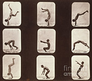 Action Photo Framed Prints - Muybridge Locomotion, Back Hand Spring Framed Print by Photo Researchers