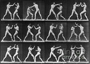 Boxing  Prints - Muybridge Locomotion, Men Boxing, 1887 Print by Photo Researchers