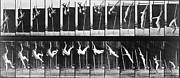 Gymnast Photos - Muybridge: Photography by Granger