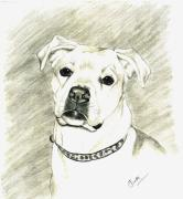 Boxer Dog Drawings Framed Prints - My Bella Framed Print by Joette Snyder