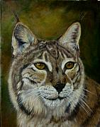 Bobcat Paintings - My Bobcat by Darlene Richardson