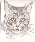 Darryl Redfern - My Cat