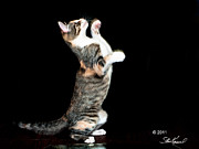 Steve Knievel - My Dance Moves