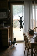 My Dog Can Fly Or Levitating Dog Print by Rick Rauzi