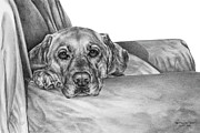 Canine Drawings Posters - My Favorite Chair Poster by Kelli Swan