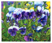 Blooming Drawings Originals - My field of Flowers by Jeanette Schumacher