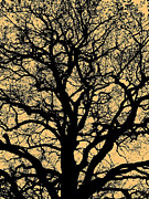 Wolken Prints - My Friend - The Tree ... Print by Juergen Weiss