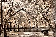Large Trees Framed Prints - My Lake Framed Print by Mario Bennet