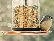 Birdseed Art - My Lil Chickadee by Trish Tritz