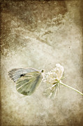 Fauna Mixed Media Acrylic Prints - My little butterfly Acrylic Print by Angela Doelling AD DESIGN Photo and PhotoArt