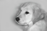 Retriever Digital Art - My Mission is Love by Cathy  Beharriell
