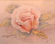 Bloom Pastels - My Mothers Rose by Nancy Rucker