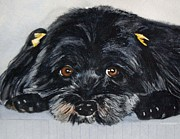 Havanese Paintings - My name is Lola by BJ Maynard
