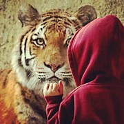 Animals Art - My Nephew The Tiger Whisperer #tiger by Melissa Wyatt