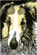 Collie Mixed Media Originals - My old friend Otis by David Esslemont