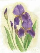 Linda Kemp - My Purple Irises