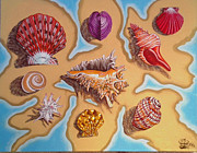 Annette Jimerson - My Sea Shell Collection