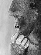 Gorilla Drawings - My Secret by Heather Ward