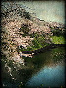 Sakura Framed Prints - My Spring Framed Print by Eena Bo