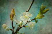 Cherry Art Mixed Media Prints - My springtime Print by Angela Doelling AD DESIGN Photo and PhotoArt