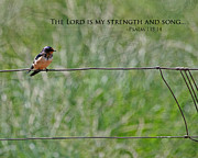 Bible Verse Photos - My Strength by Bonnie Bruno