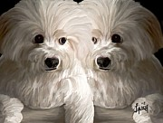 Twin Dogs Posters - My Twin Boy Dogs Poster by Laura Fatta