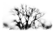 Winter Storm Metal Prints - Mysterious Trees Metal Print by David Ridley