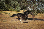 Forelock Photos - Mystic Flight D7023 by Wes and Dotty Weber