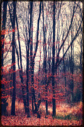 Bare Trees Mixed Media Metal Prints - Mystic Forest Metal Print by Angela Doelling AD DESIGN Photo and PhotoArt