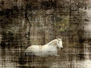Pictures Of Horses Framed Prints - Mystic Forest Framed Print by Christy Leigh