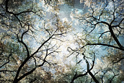 Frame Print Prints - Mystic Forest Sky Print by Andrea Hazel Ihlefeld