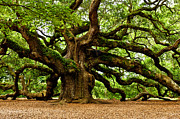 Angel Oak Photographs Framed Prints - Mystical Angel Oak Tree Framed Print by Louis Dallara