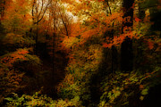 Autumn. Fall Colors - Mystical by Anthony Rego