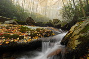 North Fork Prints - Mystical Blue Ridge Forest Print by Mark VanDyke