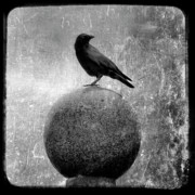 Corvus Brachyrhynchos Prints - Mystical Globe Print by Gothicolors And Crows