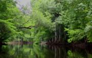 Barbara Bowen - Mystical Withlacoochee River