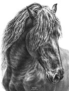 Mane Drawings - Mystique - Friesian Horse Portrait Print by Kelli Swan