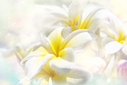 Flowering Trees Prints - Na Lei Pua Melia Aloha e ko Lele - Yellow Tropical Plumeria Maui Print by Sharon Mau