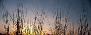 Grassland Photo Posters - Nachusa Grasslands Sunset Poster by Steve Gadomski