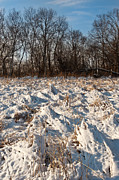 Prairie Grass Originals - Nachusa Grasslands Winter by Steve Gadomski