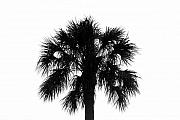Naked Palm Print by David Lee Thompson