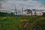 Saw Palmetto Photos - Naked Trees Swamp by Stephen  Johnson