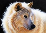 Wolf Portrait Paintings - Nala by Sandi Baker