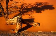 Namibia 2 Print by Mauro Celotti