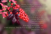 Green Burgandy Posters - Nandina Berries Phil.4 v 8-9 Poster by Linda Phelps