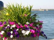 Mark Siciliano - Nantucket Wharf Flowers