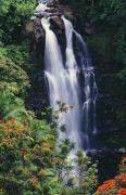 Hamakua Posters - Nanue Falls Poster by Ray Mains - Printscapes