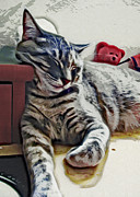 Felines Photo Prints - Nap Number Ten Print by David G Paul
