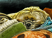 Sleeping Dog Prints - Nap Time Print by Adam Vance