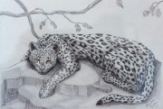Leopard Pastels Posters - Nap Time for Big Cat Poster by Nancy Rucker